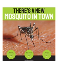 There's a New Mosquito in Town