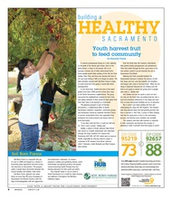 Youth harvest fruit to feed community